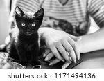 portrait of a beautiful black... | Shutterstock . vector #1171494136
