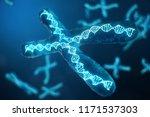3d illustration x chromosomes... | Shutterstock . vector #1171537303
