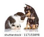 Stock photo puppy dog and sad kitten isolated on a white background 117153898