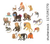 monkeys types icons set.... | Shutterstock . vector #1171592770