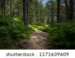mysterious path full of roots... | Shutterstock . vector #1171639609