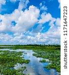 winding louisiana bayou through ...   Shutterstock . vector #1171647223