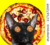 cat pizza lover. contemporary... | Shutterstock . vector #1171672549
