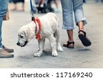 Stock photo people walking on the street with dog on leash 117169240
