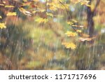 autumn park  rainy background   ... | Shutterstock . vector #1171717696