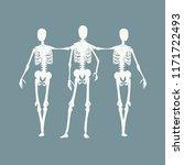 human skeleton standing and... | Shutterstock .eps vector #1171722493