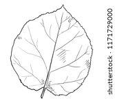 vector black sketch... | Shutterstock .eps vector #1171729000