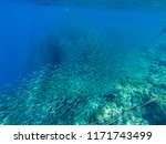 sardine carousel and coral reef ...   Shutterstock . vector #1171743499