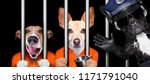 couple of  criminal dogs behind ... | Shutterstock . vector #1171791040