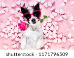 dog looking and staring at you  ... | Shutterstock . vector #1171796509