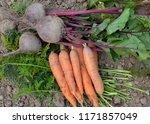 big harvest of vegetables... | Shutterstock . vector #1171857049