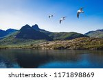 the landscape of norway in the... | Shutterstock . vector #1171898869