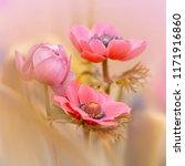 pink flower   pink crown...   Shutterstock . vector #1171916860