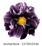 Purple Dahlia. Flower On A...