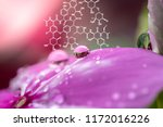 plants background with... | Shutterstock . vector #1172016226