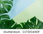 tropical jungle monstera leaves ... | Shutterstock . vector #1172016469