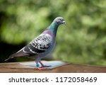 close up full body of speed... | Shutterstock . vector #1172058469