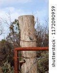 juniper post and rusty gate... | Shutterstock . vector #1172090959