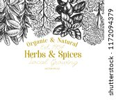 culinary herbs and spices... | Shutterstock .eps vector #1172094379
