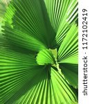 bright green palm leaves | Shutterstock . vector #1172102419