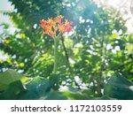 beautiful spike flower red... | Shutterstock . vector #1172103559