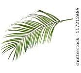 One Green Palm Leaf Close Up...