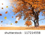 autumn landscape with the... | Shutterstock . vector #117214558