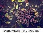 Beautiful Heather Flowers...