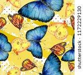 exotic butterflies wild insect... | Shutterstock . vector #1172229130