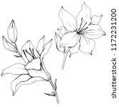 wildflower lilies in a style... | Shutterstock . vector #1172231200