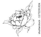 wildflower peony in a style... | Shutterstock . vector #1172231326