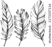 vector bird feather from wing... | Shutterstock .eps vector #1172237116
