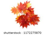 autumn maple leaves | Shutterstock . vector #1172275870