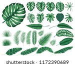 detailed tropical leaves and... | Shutterstock .eps vector #1172390689