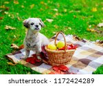 happy dog with a basket of... | Shutterstock . vector #1172424289