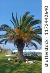 palm tree leaves | Shutterstock . vector #1172442640