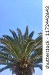 palm tree leaves | Shutterstock . vector #1172442643