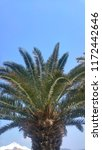 palm tree leaves | Shutterstock . vector #1172442646