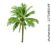 realistic coconut tree  natural ... | Shutterstock .eps vector #1172480149