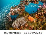Vibrant Coral Reef With...