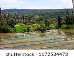 rice terraces and mountains.... | Shutterstock . vector #1172534473