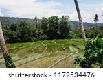 rice terraces and mountains.... | Shutterstock . vector #1172534476