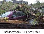 New York   Oct 30  Fallen Tree...