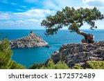 Crimean Pine On A Cliff...