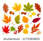 vector set of colorful autumn... | Shutterstock .eps vector #1172583820