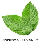 mint leaves isolated on white... | Shutterstock . vector #1172587279