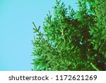 retro spruces image with... | Shutterstock . vector #1172621269