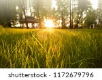 young spring grass at sunset... | Shutterstock . vector #1172679796