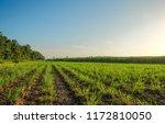integrated farming system... | Shutterstock . vector #1172810050