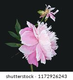 a picturesque peony flower.... | Shutterstock .eps vector #1172926243